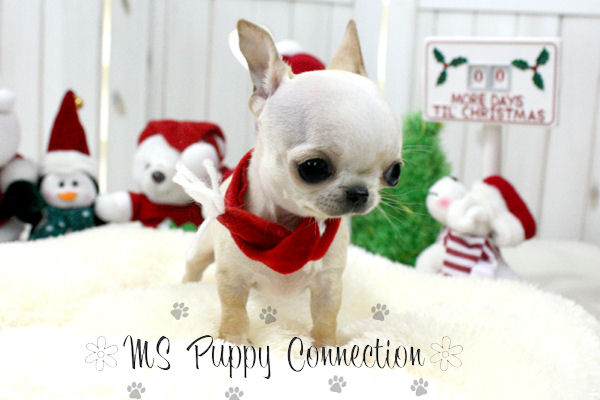Ms Puppy Connection | Directory ac